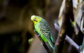 Fugle Tilbehør