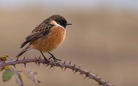 Vildfugle Foder