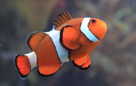 Fiske Tilbehør