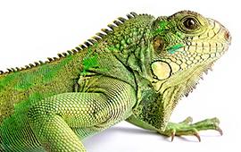 Reptil Tilbehør